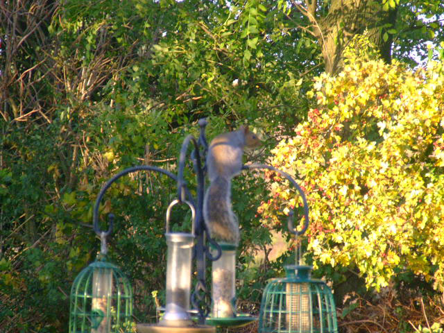 squirrel-on-top-feeder.jpg